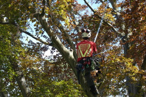 Arborist tree services tree reduction and shaping Wellington New Zealand