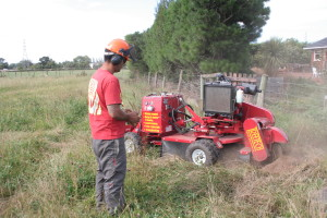Treetech tree specialist stump grinding in farmland Christchurch New Zealand
