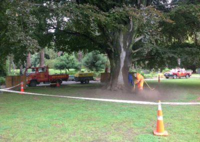 Treetech tree specialist Maintaining a trees health Christchurch Wellington New Zealand