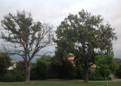 Tree specialist landscaping consultancy Christchurch Arborist Wellington Tree Services
