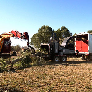 Treetech tree specialist using a digger to feed a tree into a large chipper Christchurch New Zealand