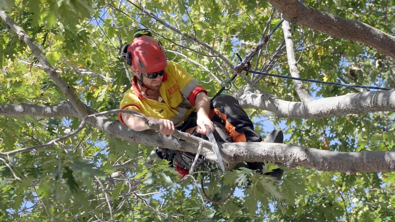 Tree pruning by Treetech arborist tree specialist Christchurch Wellington New Zealand
