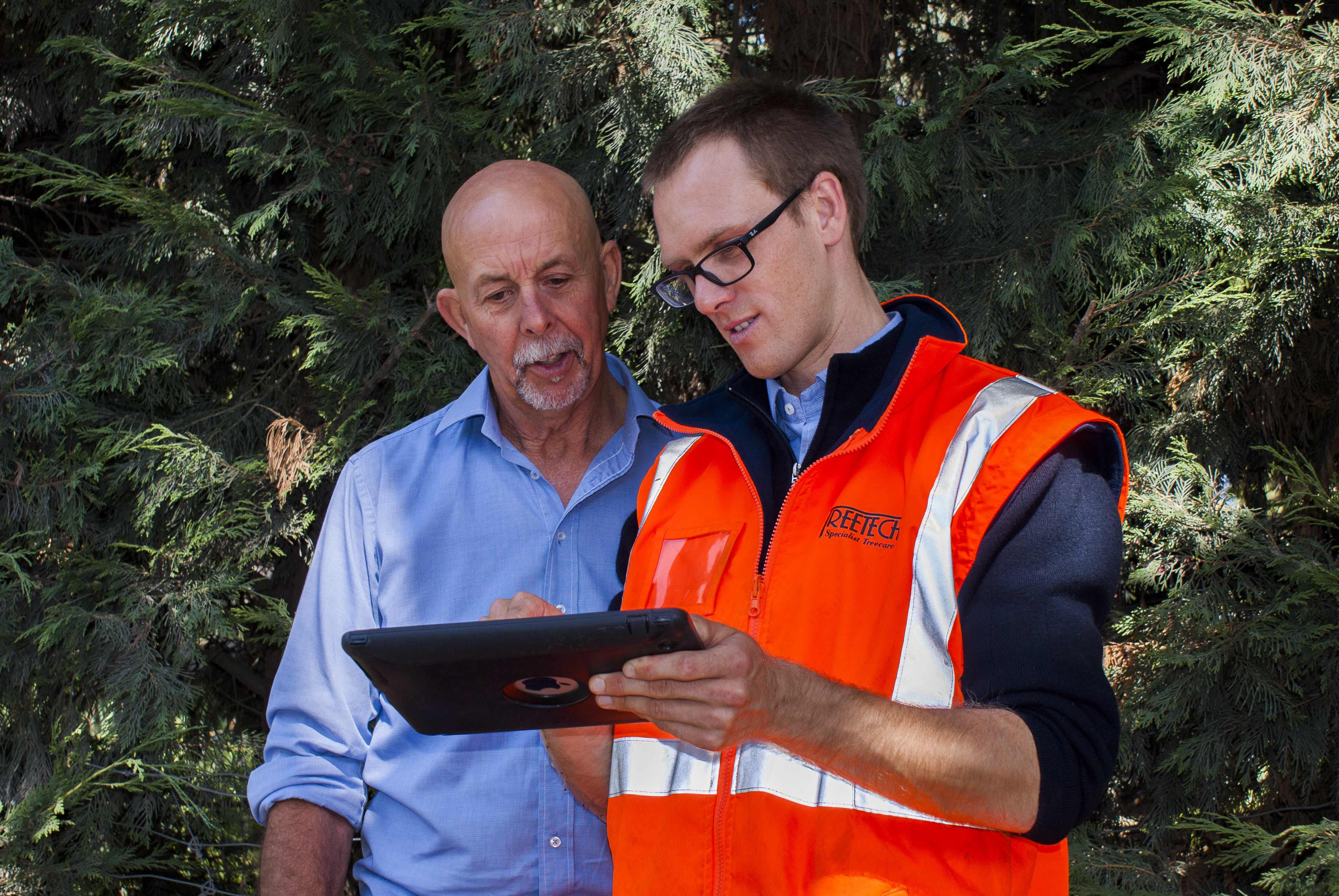 How To Become An Arborist Wellington And Christchurch