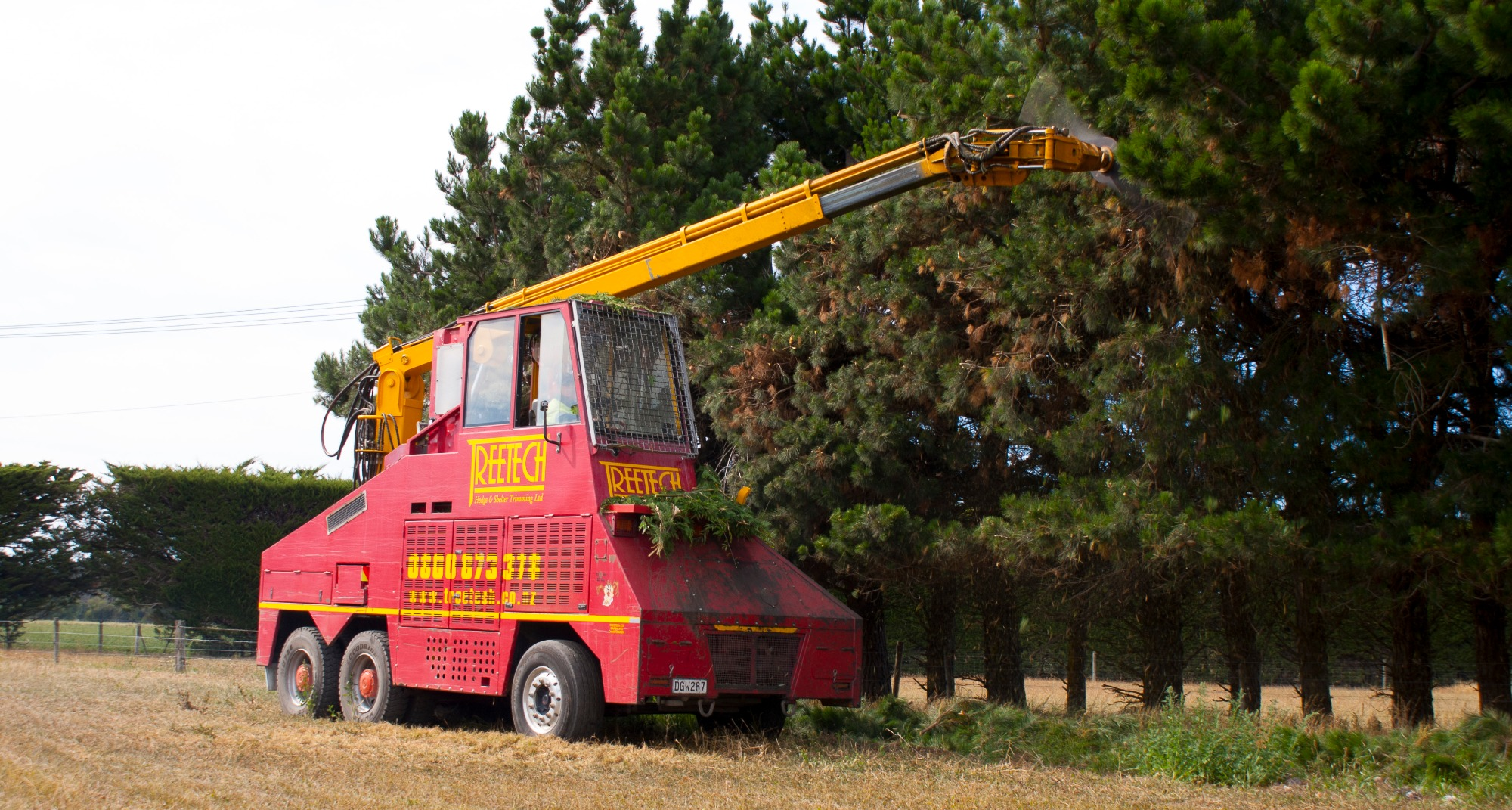 Residential tree pruning services for trees and shrubs Christchurch Wellington New Zealand