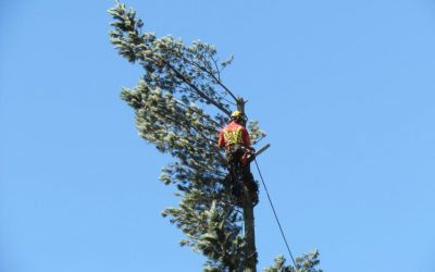 Apply for Tree Renewal