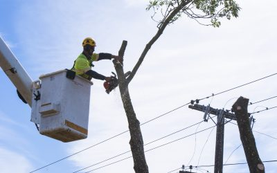 Power Lines… What You Need to Know
